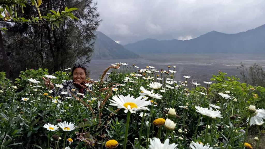 taman bunga aster dengan latar segara wedi (lautan pasir) di mentingen hill